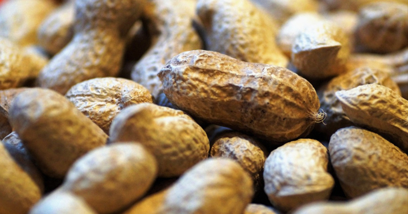 Image for Eating Nuts Boosts Brain Health – Study
