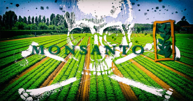 "Image for Monsanto & Vaccines: Hear The ""Yellow Vest Doctor"" Explain The Reason For The Protests"