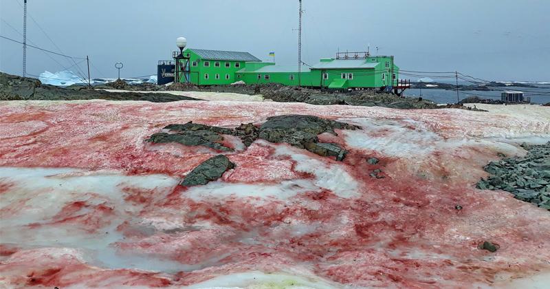Image for Red Snow Near Antarctic Base Baffles Netizens